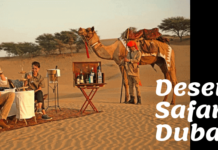 Spend time in Safari Desert