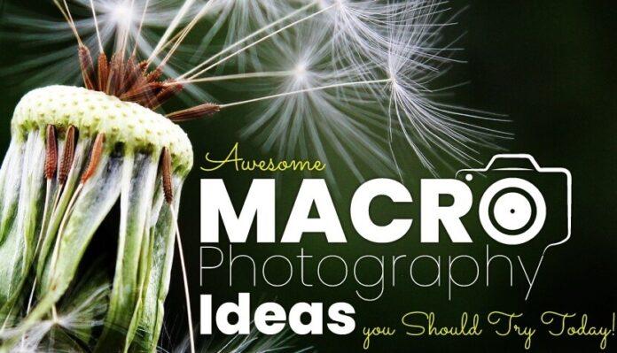 Macro Photography Ideas